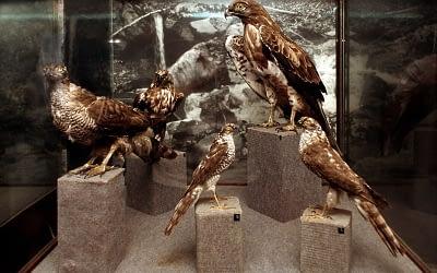 Природонаучен музей Черни Осъм